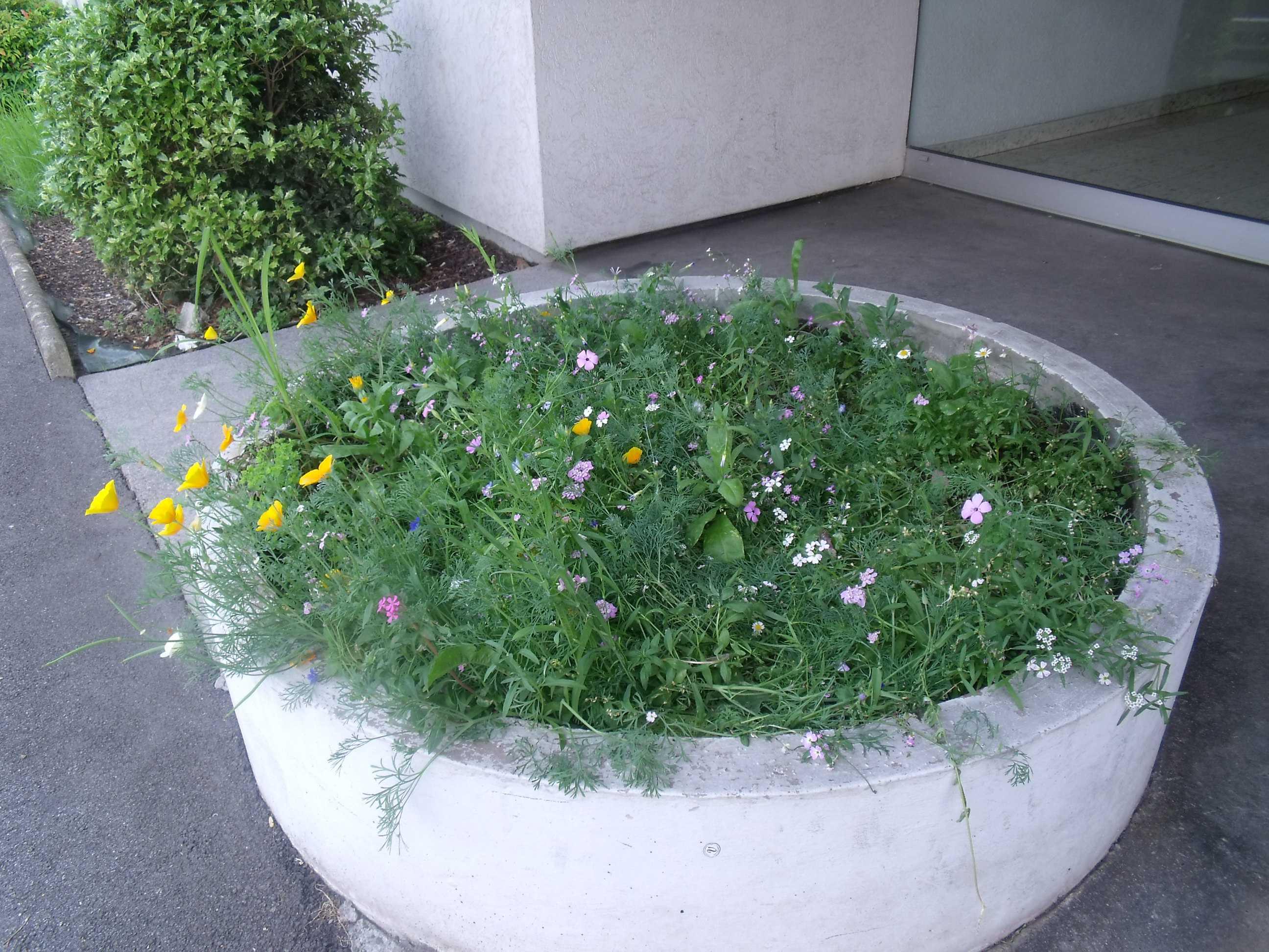 jardinière4
